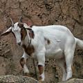Goat Print 9245 by Paulette Thomas