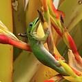 Gold Dust Gecko  by Pamela Bushnell