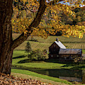 Golden Autumn In Vermont 2018 Square by Terry DeLuco