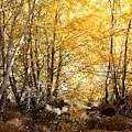 Golden Autumn Light by Carol Groenen