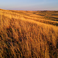 Golden Grass by Carl Young