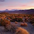 Golden Grasslands At Sunset Isluga National Park Chile by James Brunker