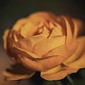 Golden Hour Goddess By Tl Wilson Photography by Teresa Wilson