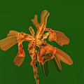 Golden Iris P #i2 by Leif Sohlman