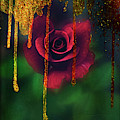 Golden Moments Of A Garden Rose by Toni Hopper