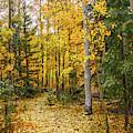 Golden Path by Susan Warren