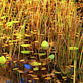 Golden Pond by Dee Browning
