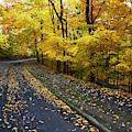 Golden Road by Steve  Ondrus