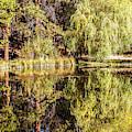 Golden Shevlin Park by David Millenheft