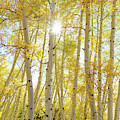 Golden Sunshine On An Autumn Day by James BO Insogna
