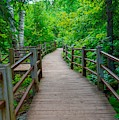 Gooseberry River Trail by Susan Rydberg