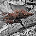 Gordale Scar Tree by Daniel McNamara