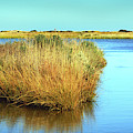 Gordon's Pond State Park Panorama by Bill Swartwout Fine Art Photography