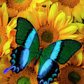 Gorgeous Blue Green Butterfly by Garry Gay