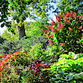 Gorgeous Gardens At Cornell University - Ithaca, New York by Lynn Bauer
