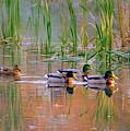 Got My Ducks In A Row by Karen Cook