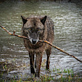 Got The Stick by Laura Hedien