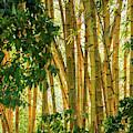 Graceful Bamboo by Sabrina L Ryan