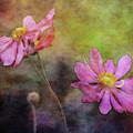 Graceful Gathering 5566 Idp_3 by Steven Ward