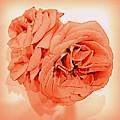 Grandmas Roses - Living Coral by VIVA Anderson