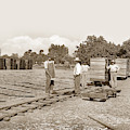 Grape Drying, Visalia, Circa 1910 by California Views Archives Mr Pat Hathaway Archives