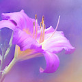 Pretty In Pastel Little Grapette Daylily by Anita Pollak