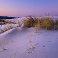 Grass And Frost At Dawn by Robert Potts