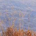 Grasses By The Lake by Kae Cheatham