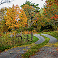Gravelled Road In Autumn by Torbjorn Swenelius