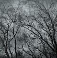 Gray Misty Morning by Bill Posner