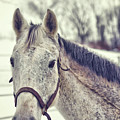 Gray On Winter White by JAMART Photography