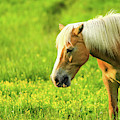 Grazing Cades Cove Horse by Dan Sproul