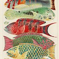 Great Barrier Reef Fishes From The Great Barrier Reef Of Australia  1893 By William Saville-kent  1 by William Saville-Kent