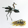 Great Blue Heron Acrylic Ink 5 by Rick Mosher