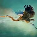 Great Blue Heron by Robert FERD Frank