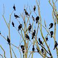 Great Cormorants by Arterra Picture Library