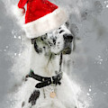 Great Dane Wearing Santa Hat by Doc Braham