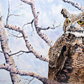 Great Horned Owl by Stephen S Yaeger