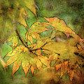 Green And Gold Maple 5581 Idp_2 by Steven Ward