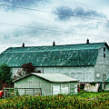 Green Barn In Quebec by Tatiana Travelways