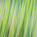 Green Grasses by Brad Bellisle