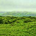 Green Island #i1 by Leif Sohlman
