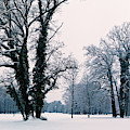 Green-leaved Trees In Winter by Sun Travels