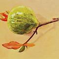 Green Pomegranate by Dai Wynn