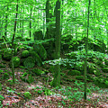 Green Stony Forest In Vogelsberg by Sun Travels