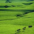 Green Wrinkles by Jeff Phillippi