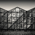 Greenhouse Shadows by Dave Bowman