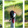 Grey Crowned Crane Gulf Shores Al Collage 5 Triptych by Ricardos Creations