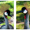 Grey Crowned Crane Gulf Shores Al Collage 7 Diptych by Ricardos Creations