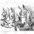 Grey Trio by Brad Allen Fine Art